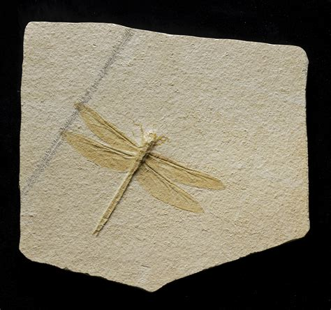 A VERY LARGE FOSSIL DRAGONFLY, SOLNHOFEN, GERMANY   Christie's