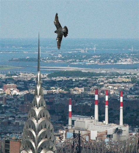 New York State to Turn Lights Out for Migrating Birds